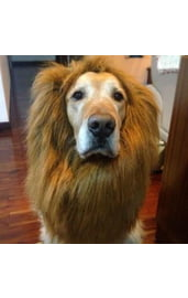 Грива льва для собак