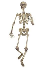 Подвесной скелет 160 см