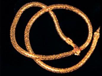 Ремень-змея (UNI) - Аксессуары на карнавал