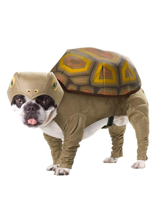 Костюм для собаки Черепаха (Боксер) - Юмор