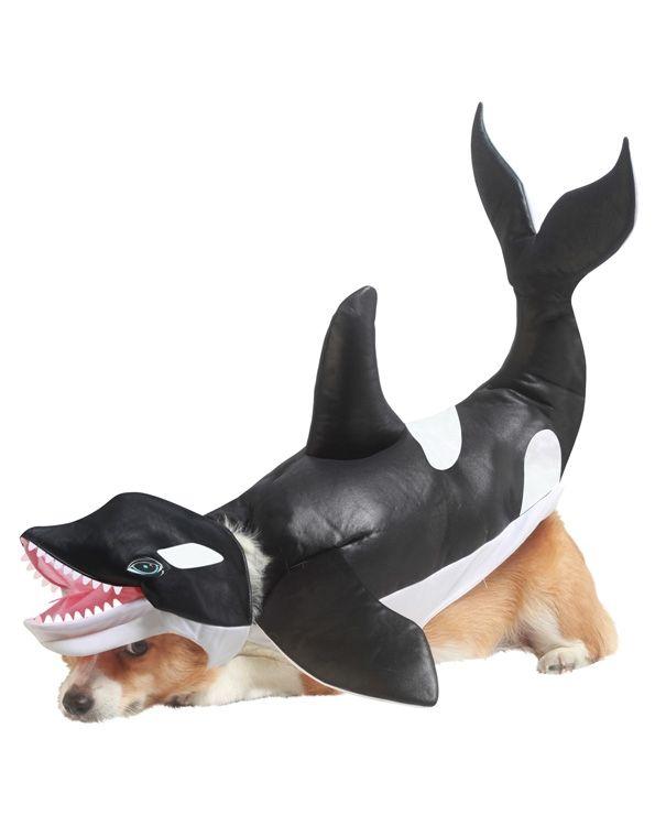 Костюм для собаки Касатка (Бишон Фризе) - Животные и зверушки