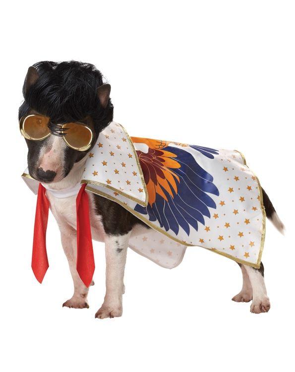 Костюм для собаки Король рок-н-ролла (Бишон Фризе) - Юмор