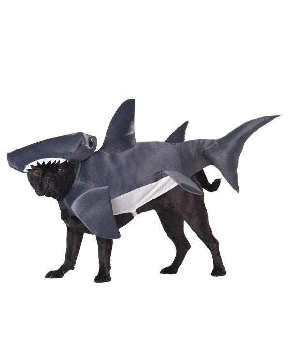 Костюм для собаки Акула-молот (Бишон Фризе) - Юмор