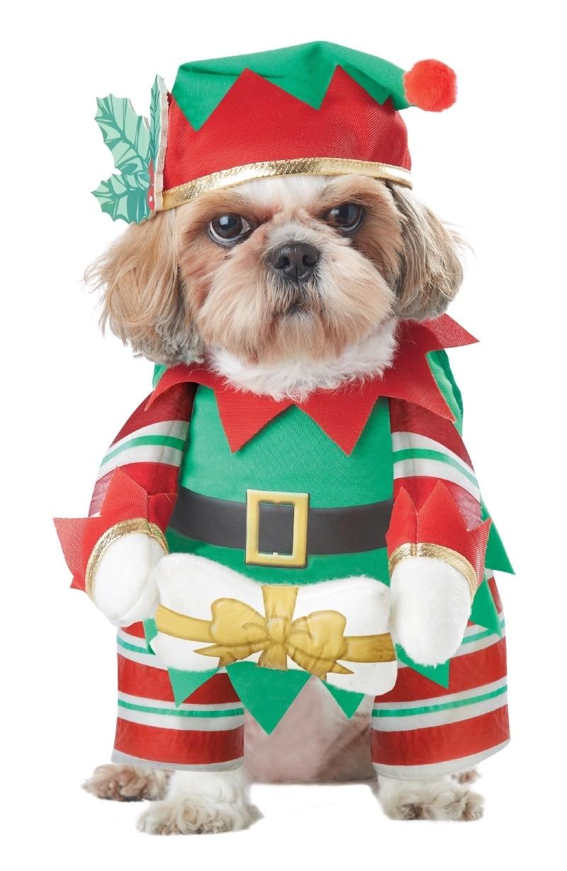 Костюм для собак Рождественский Эльф (Такса Миниатюрная) - Новогодние костюмы
