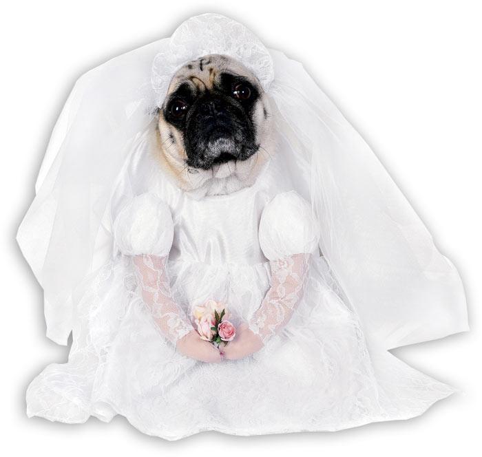 Костюм Невесты собаки (S) сумку для собаки б у
