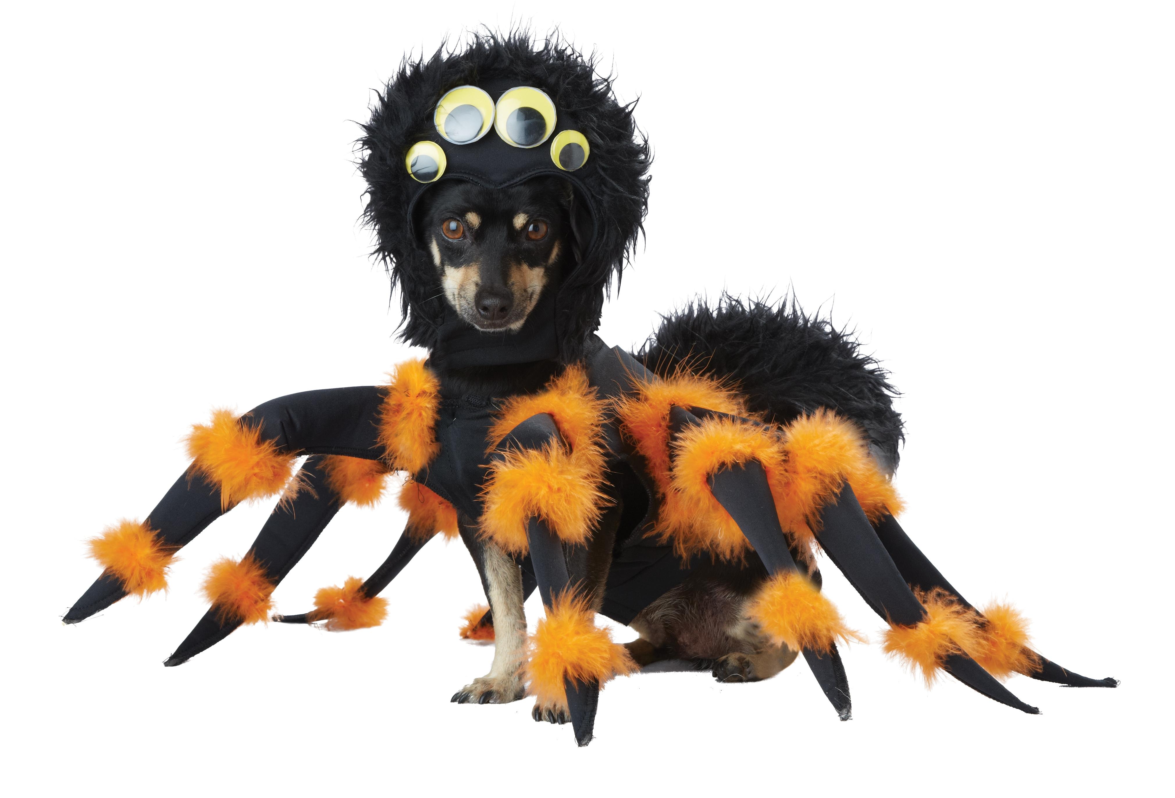 Костюм паука для собаки (Такса Миниатюрная) - Животные и зверушки