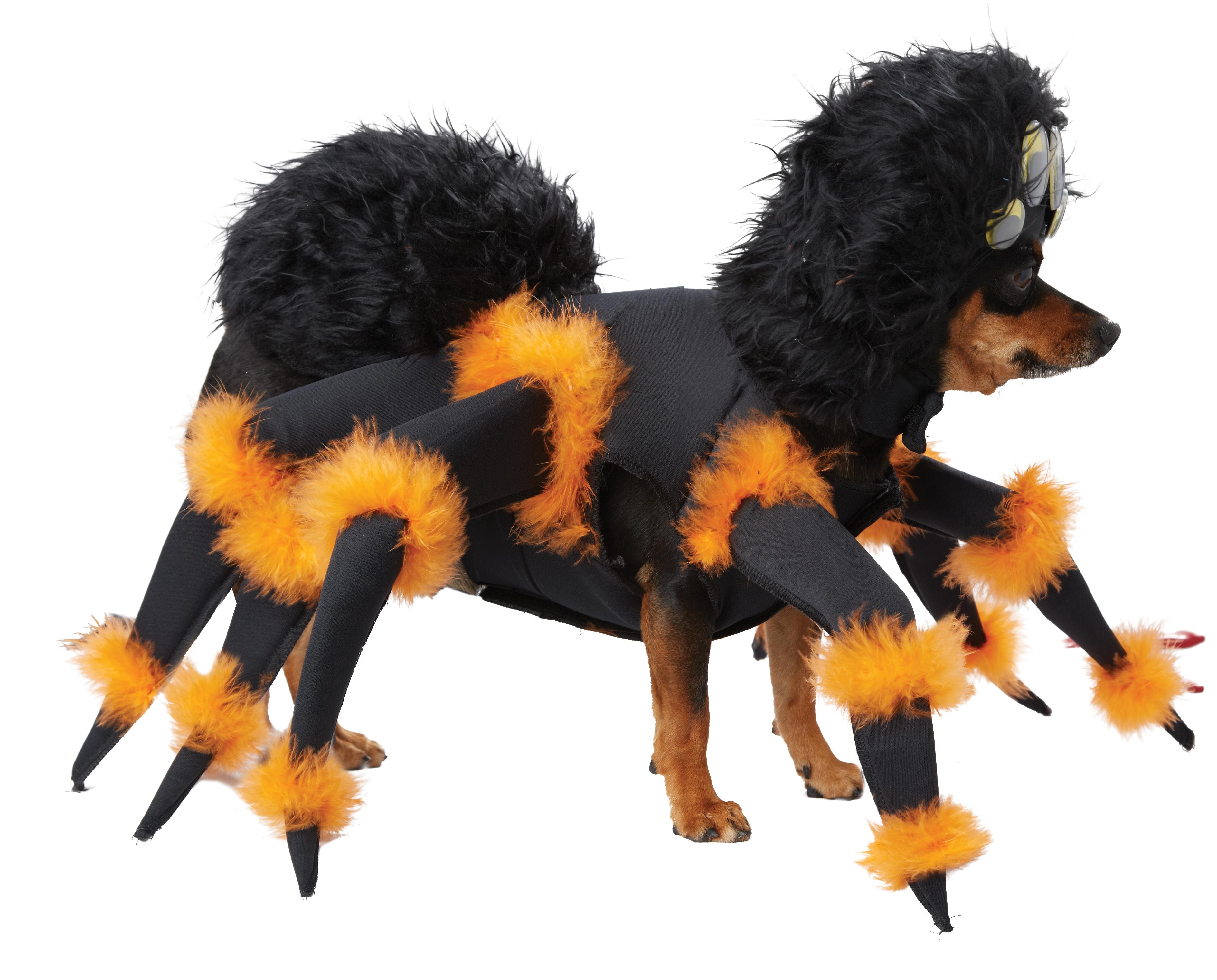 Костюм паука для собаки (Бишон Фризе) от Vkostume